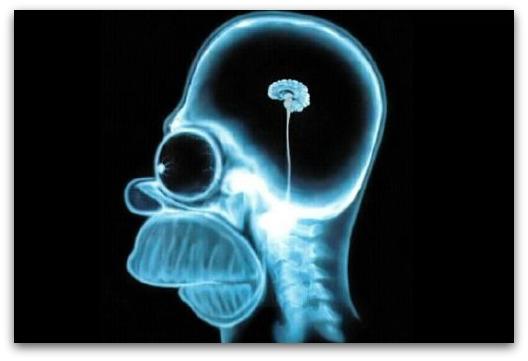 homer-brain