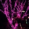 Purple lights ...