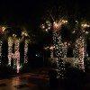 Palmetto lights ...
