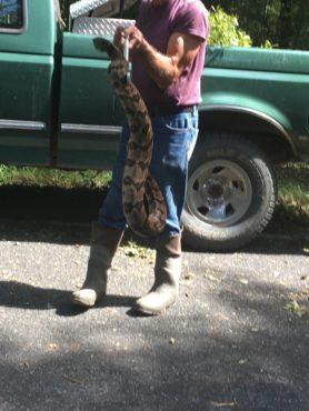rattlesnake 003