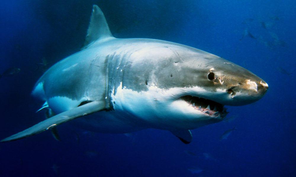 shark week 2020 - photo #7