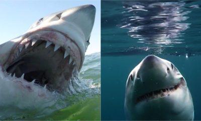 South Carolina Sharks